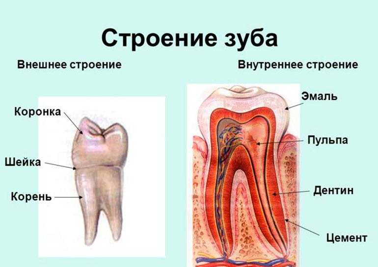 zubi-cheloveka-01